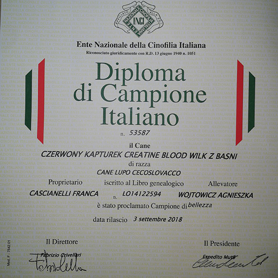 CZERWONY KAPTUREK CREATINE BLOOD - NEW ITALIAN CHAMPION